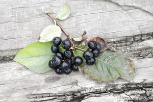vino-iz-chernoplodnoy-ryabiny-5