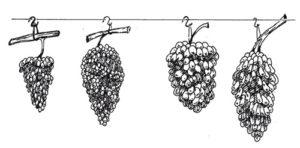 hranit-vinograd-3