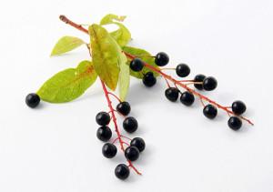 vino-iz-cheryomuhi-2