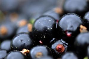 vino-iz-chyornoj-smorodiny-3