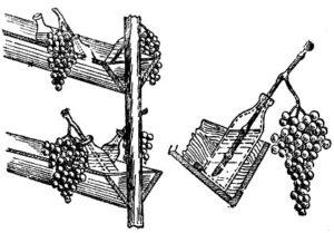 hranit-vinograd