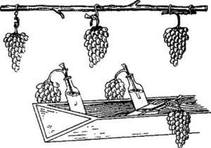 hranit-vinograd-4