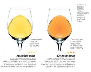 molodoe-vino-2