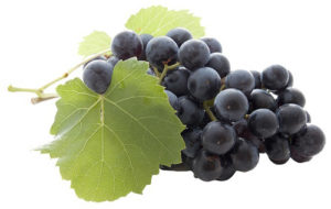 vinograda-na-litr-vina-6