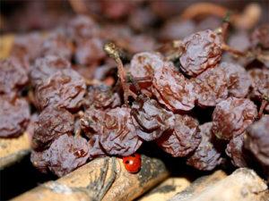vino-iz-podvyalennogo-vinograda-2