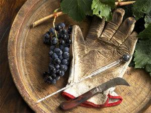 vino-iz-primorskogo-vinograda-2