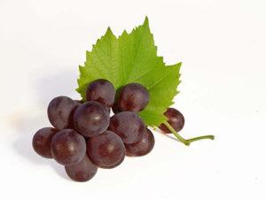 vino-iz-vinograda-izabella